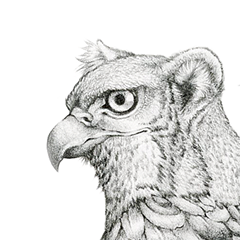 PENCIL - Common Red Tail Gryphon
